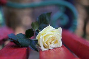 25 Novembre: dall'assassinio delle sorelle Mirabal ai giorni nostri